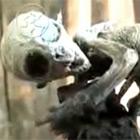 Nepřátelští mimozemšťané už jsou na Zemi