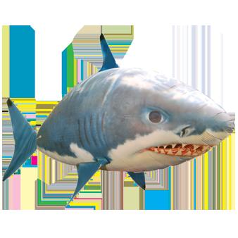 letajici_ryba-zralok